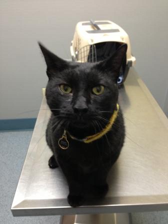 Buddy at the vet